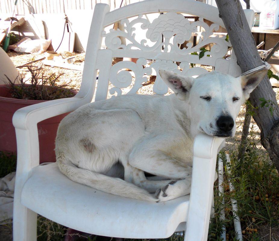 Mykey napping