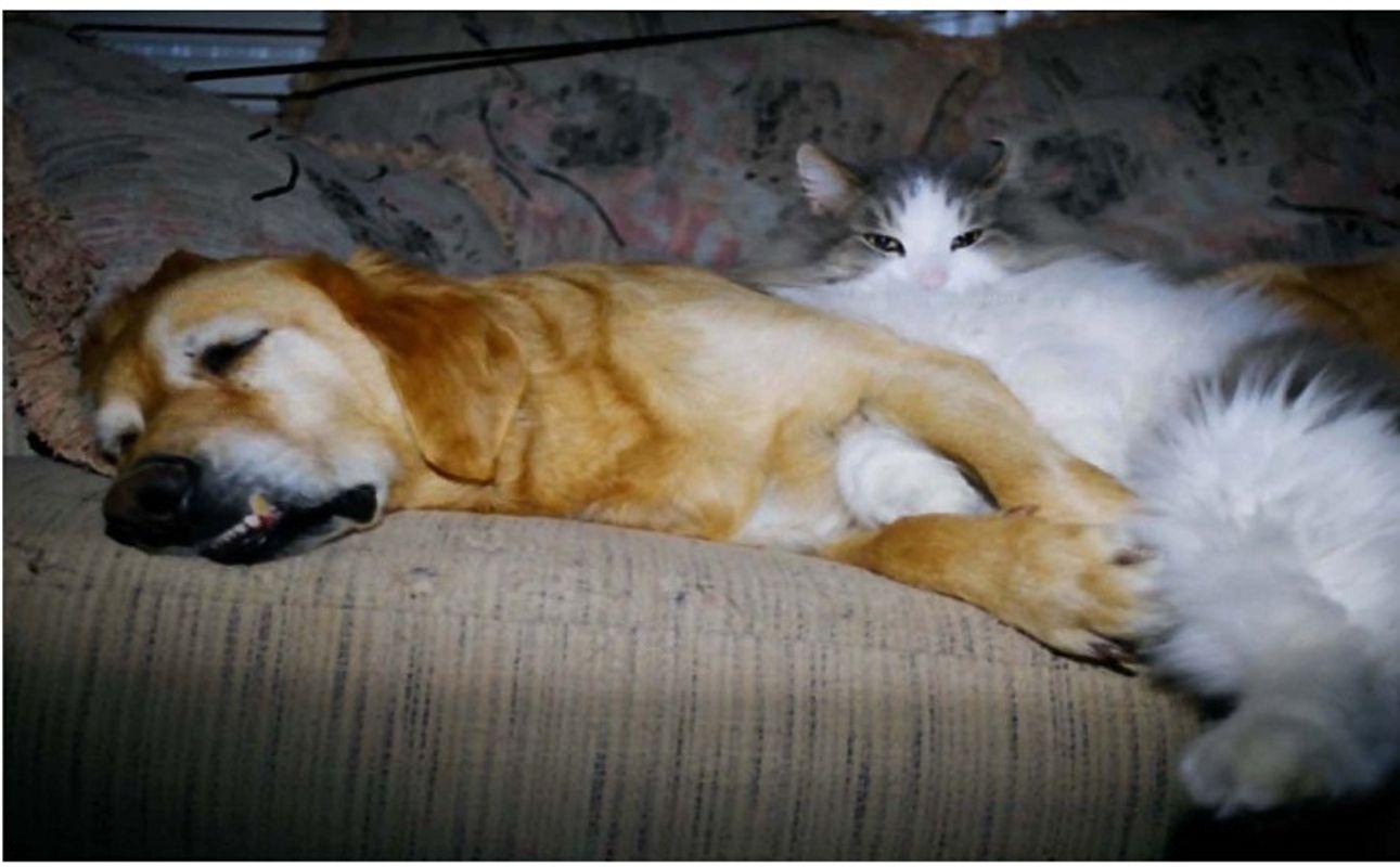 Gracie & Spunky