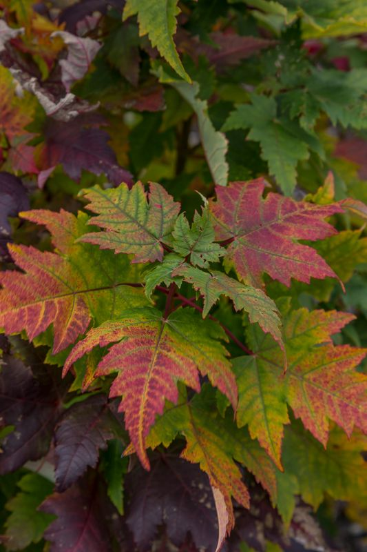 Autumn Leaves-- Just love all the colors
