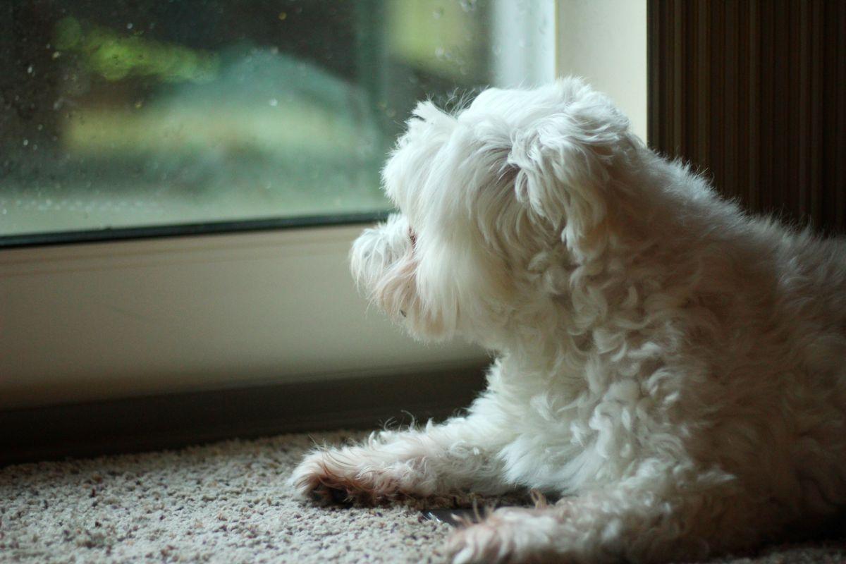 I Want to Go Outside!