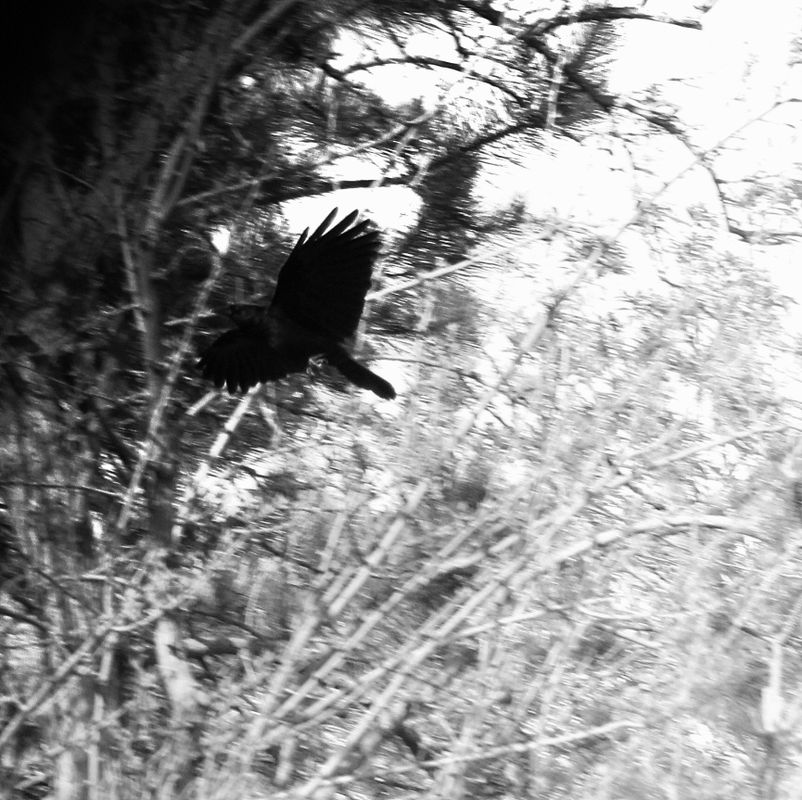 Legend of the Crow