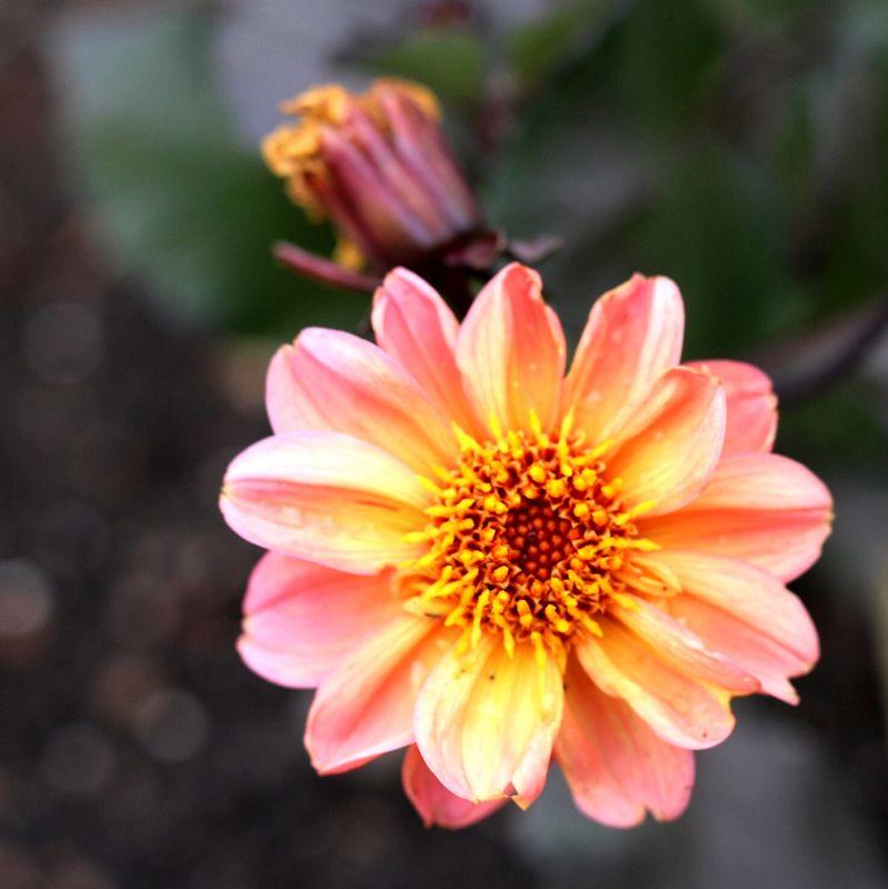 Pretty Flowers 1