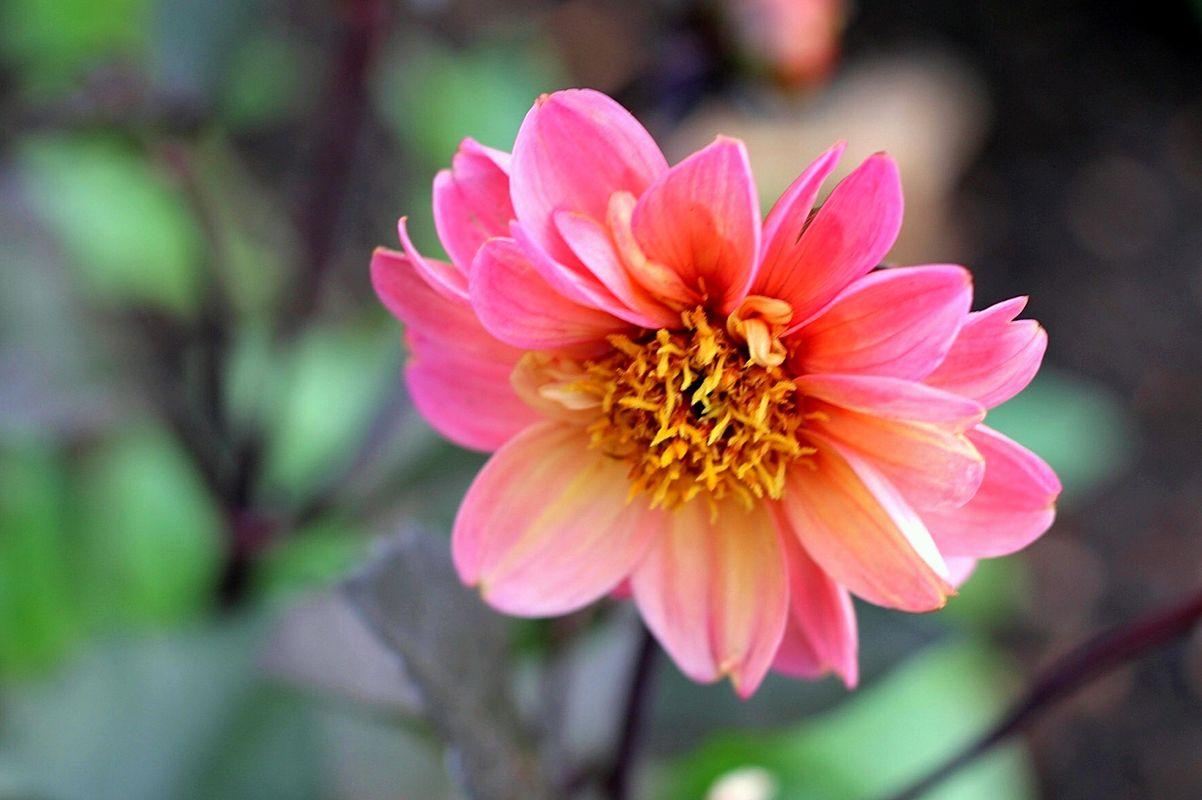 Pretty Flowers 2