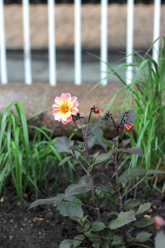 One Flower Garden