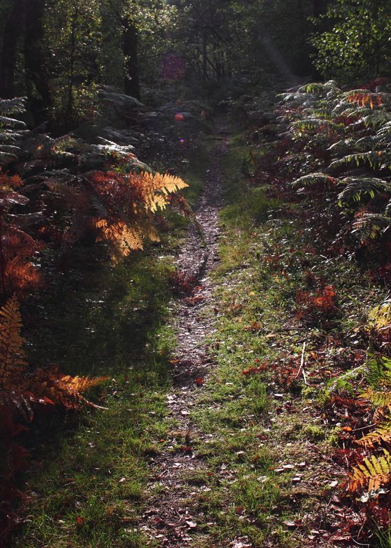 Pleasant forest path
