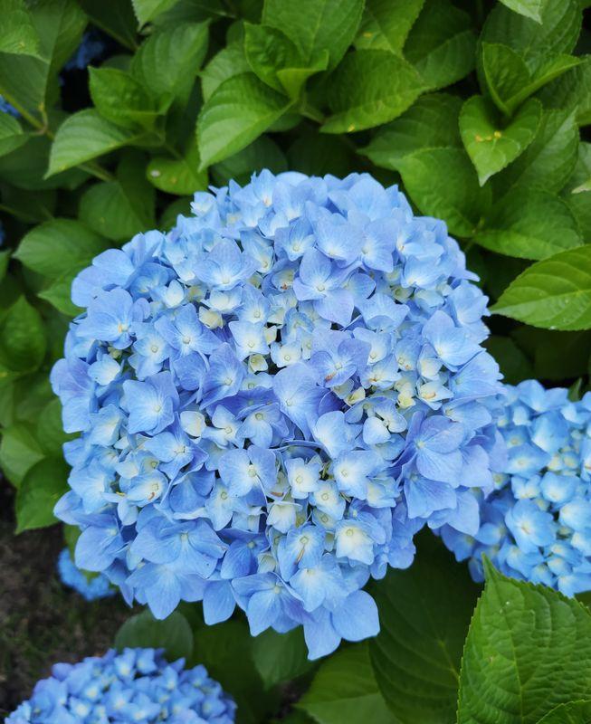 I flower u !