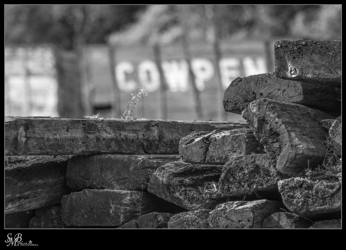 Old Timber #2