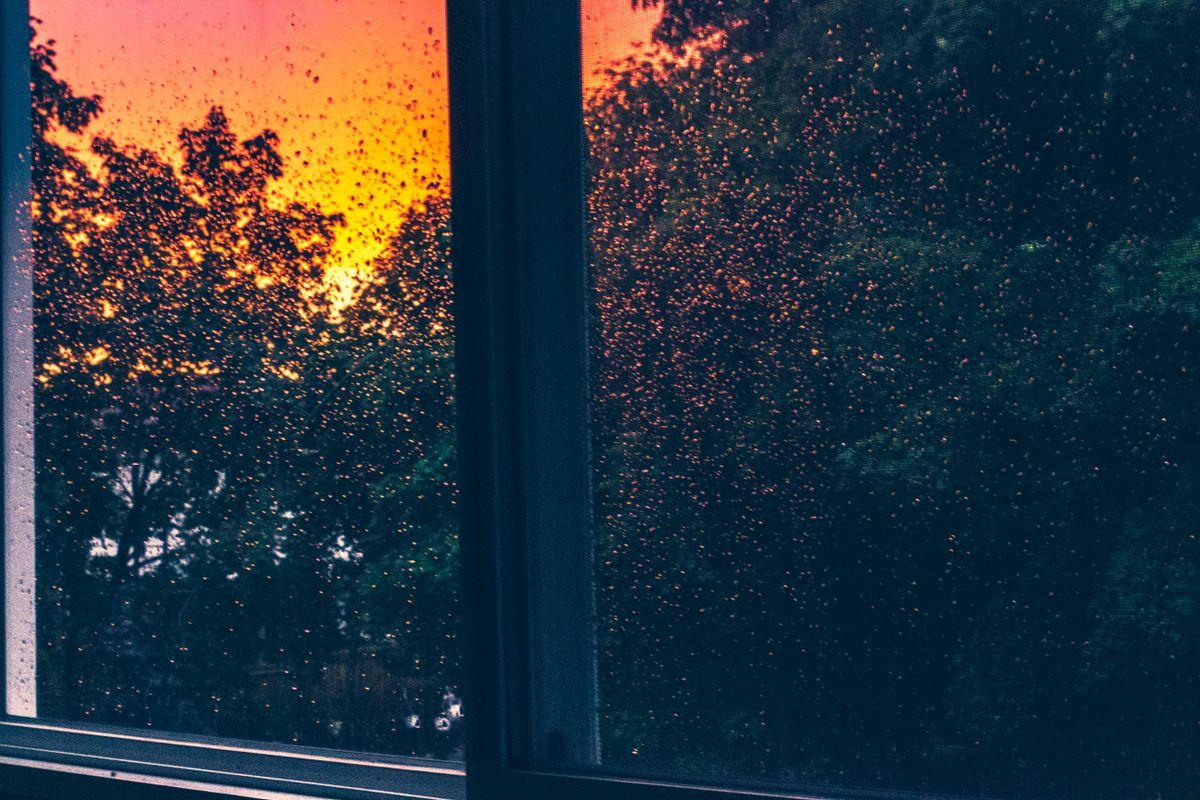 My window when it rains