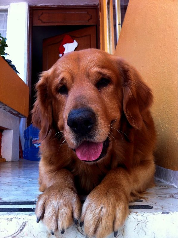 The perfect dog_love