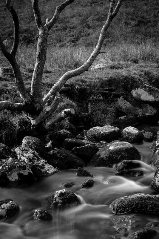 Wistmans Wood Devonport Leat on Dartmoor National Park Devon Uk