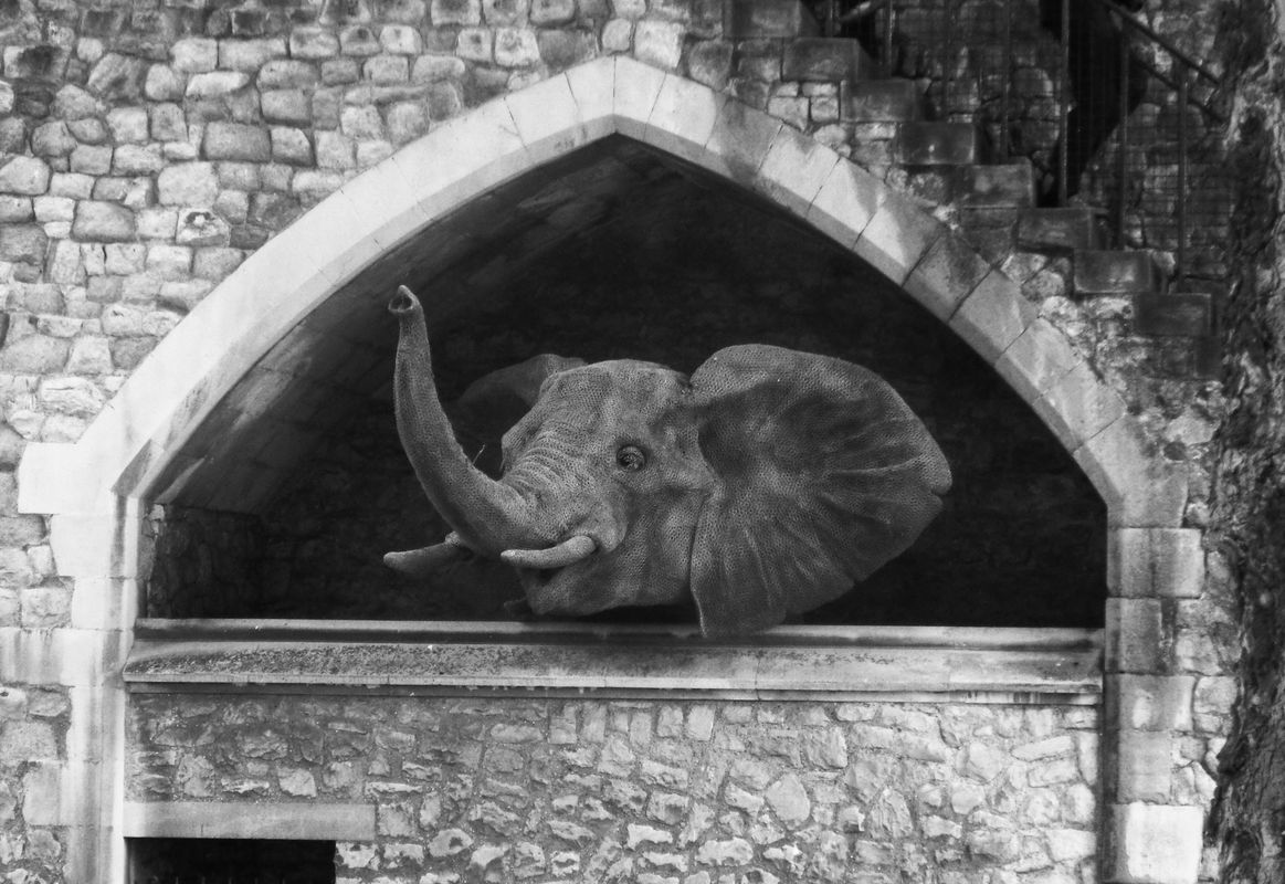 Elephant at Tower of London in England