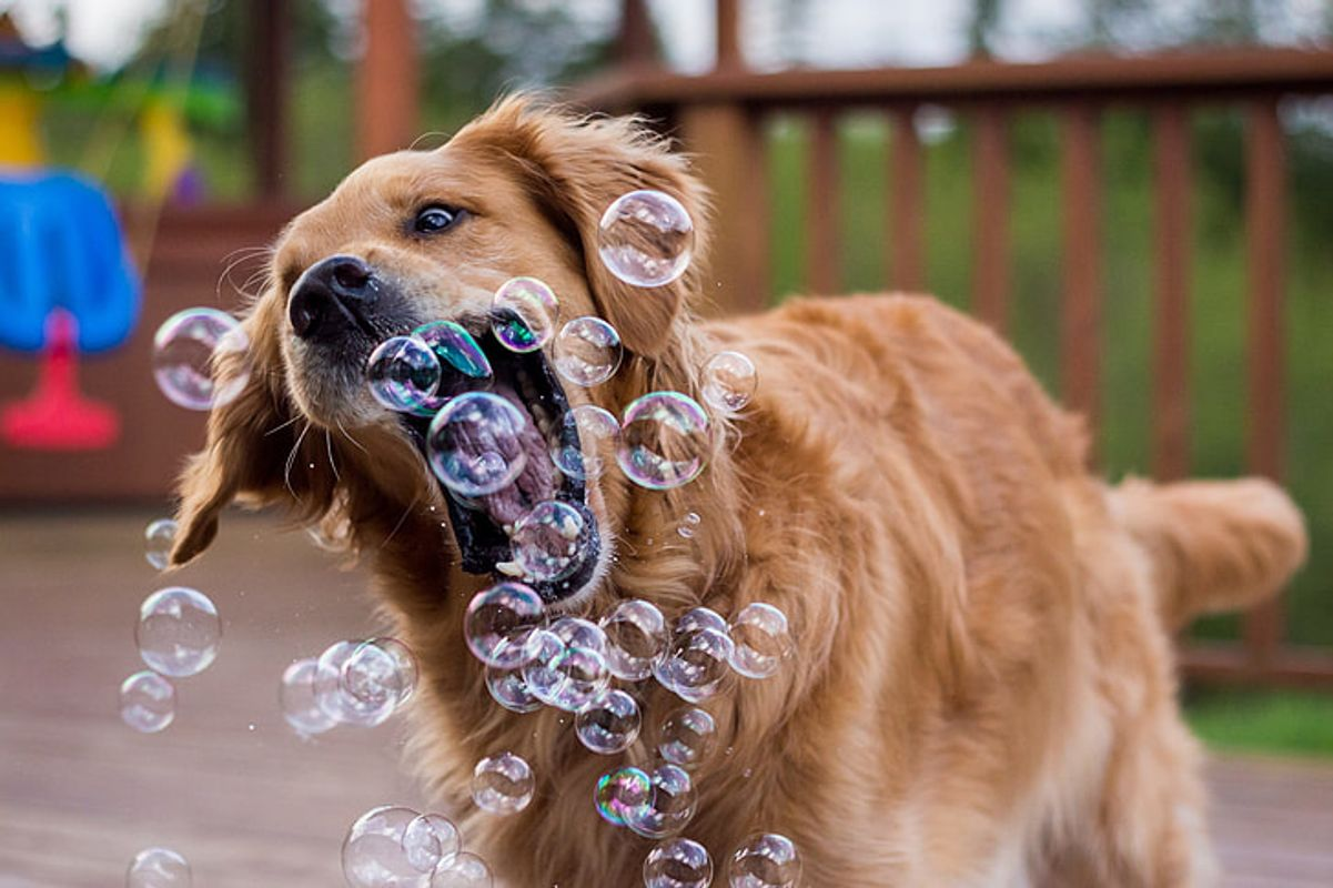 Dog-bubble-play-funny