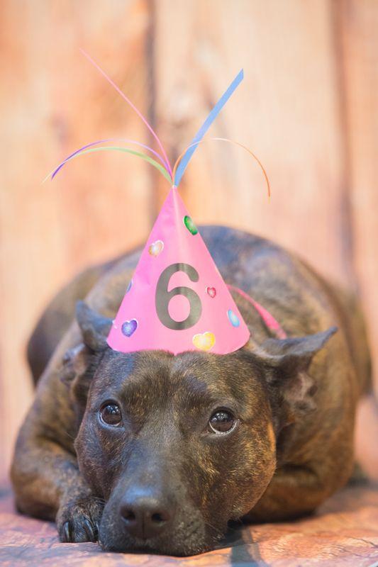 Broxie's 6th Birthday