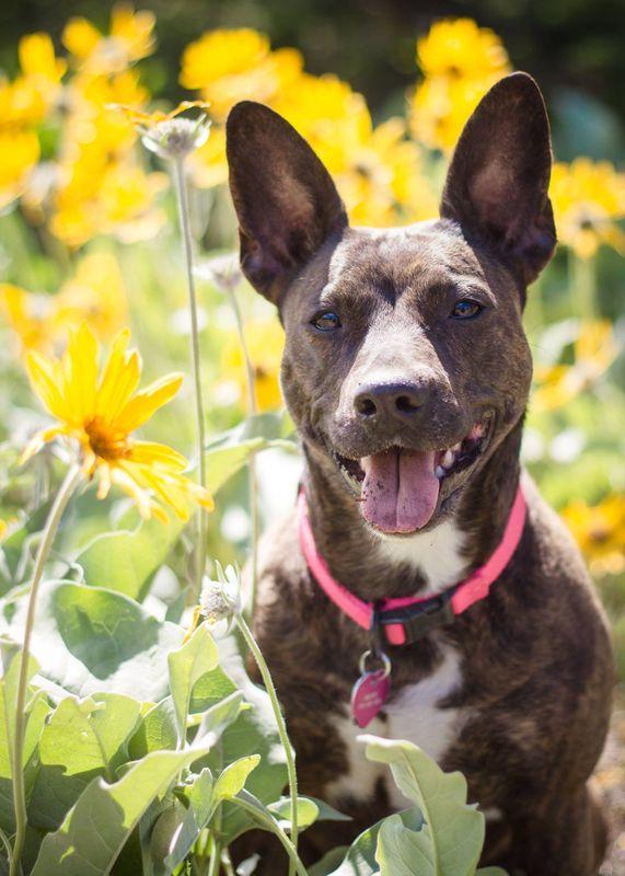 Broxie amongst the daisies.