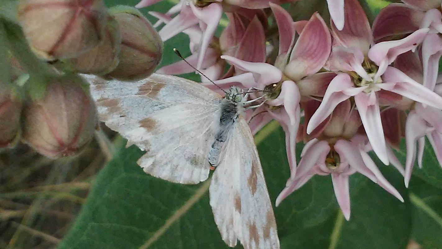 A Lovely Moth