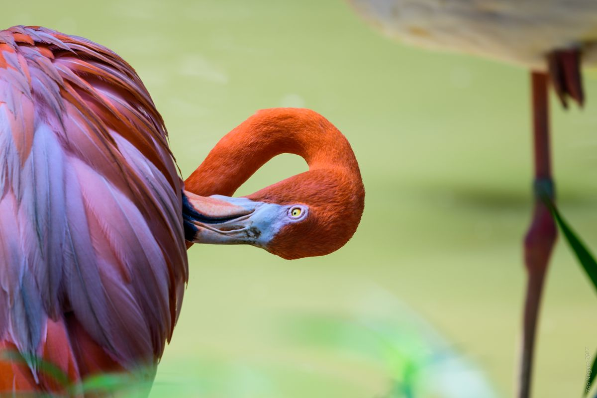 Neck Twisting Bird #1