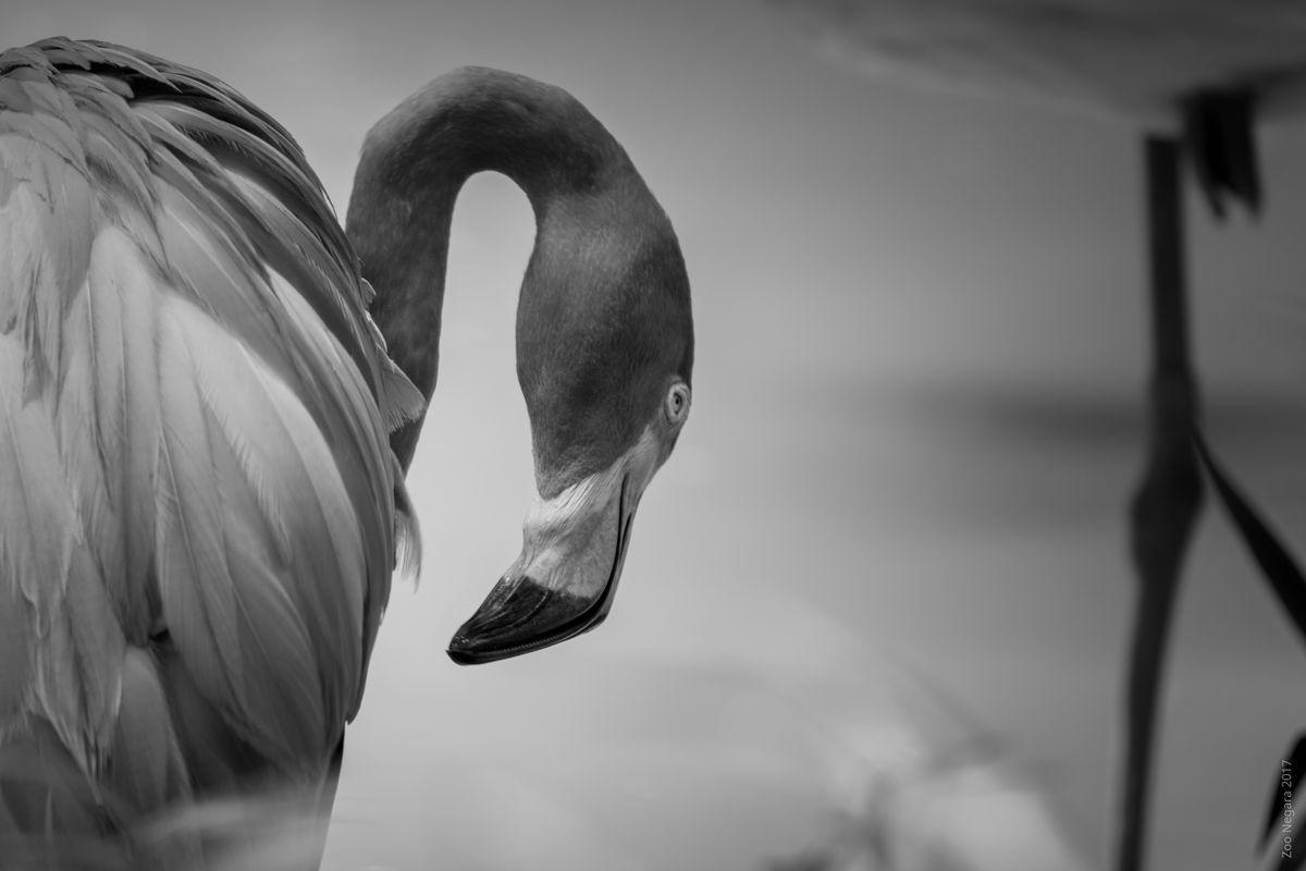 Neck Twisting Bird #4