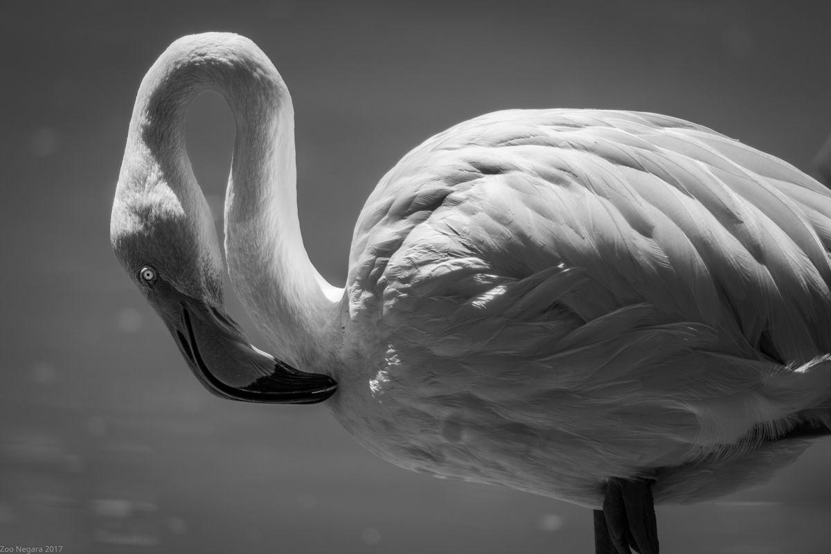 Neck Twisting Bird #6
