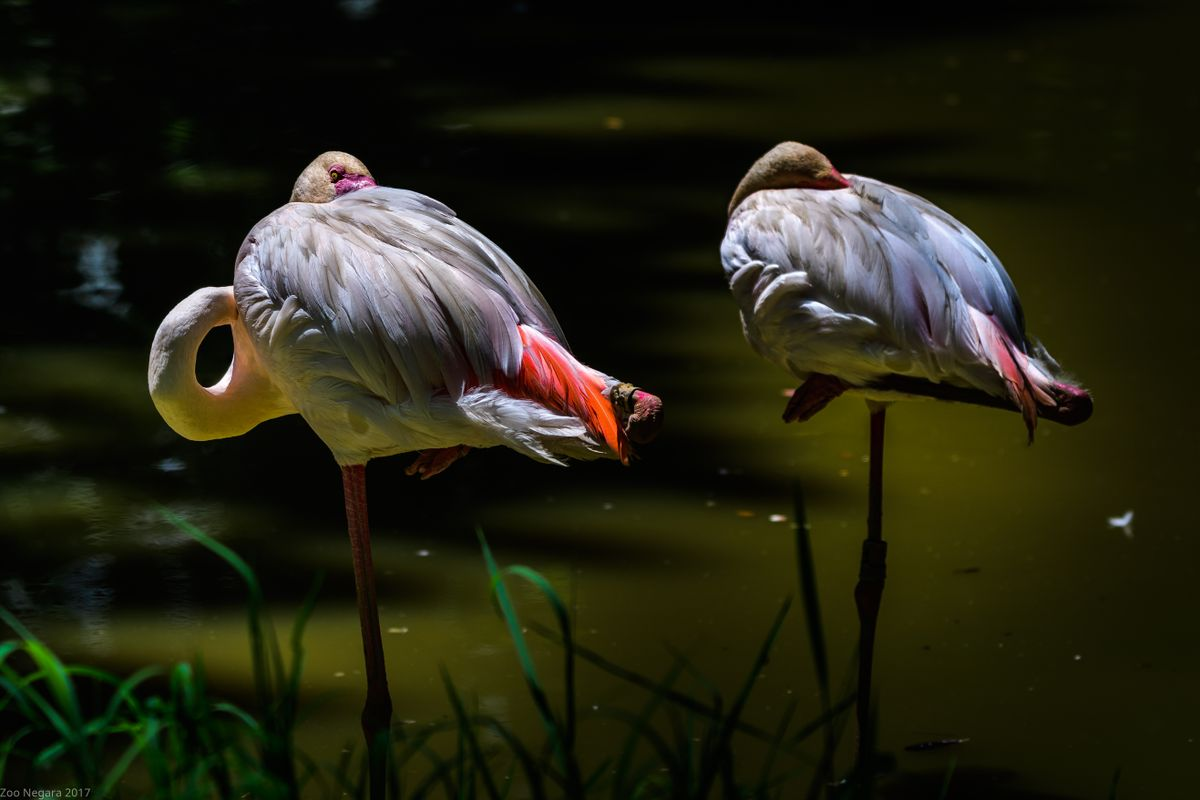 Neck Twisting Bird #7