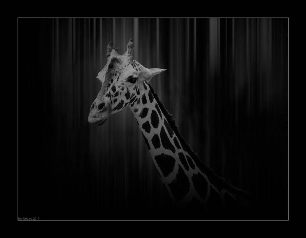 Zootopia: Portrait of a Long Neck!