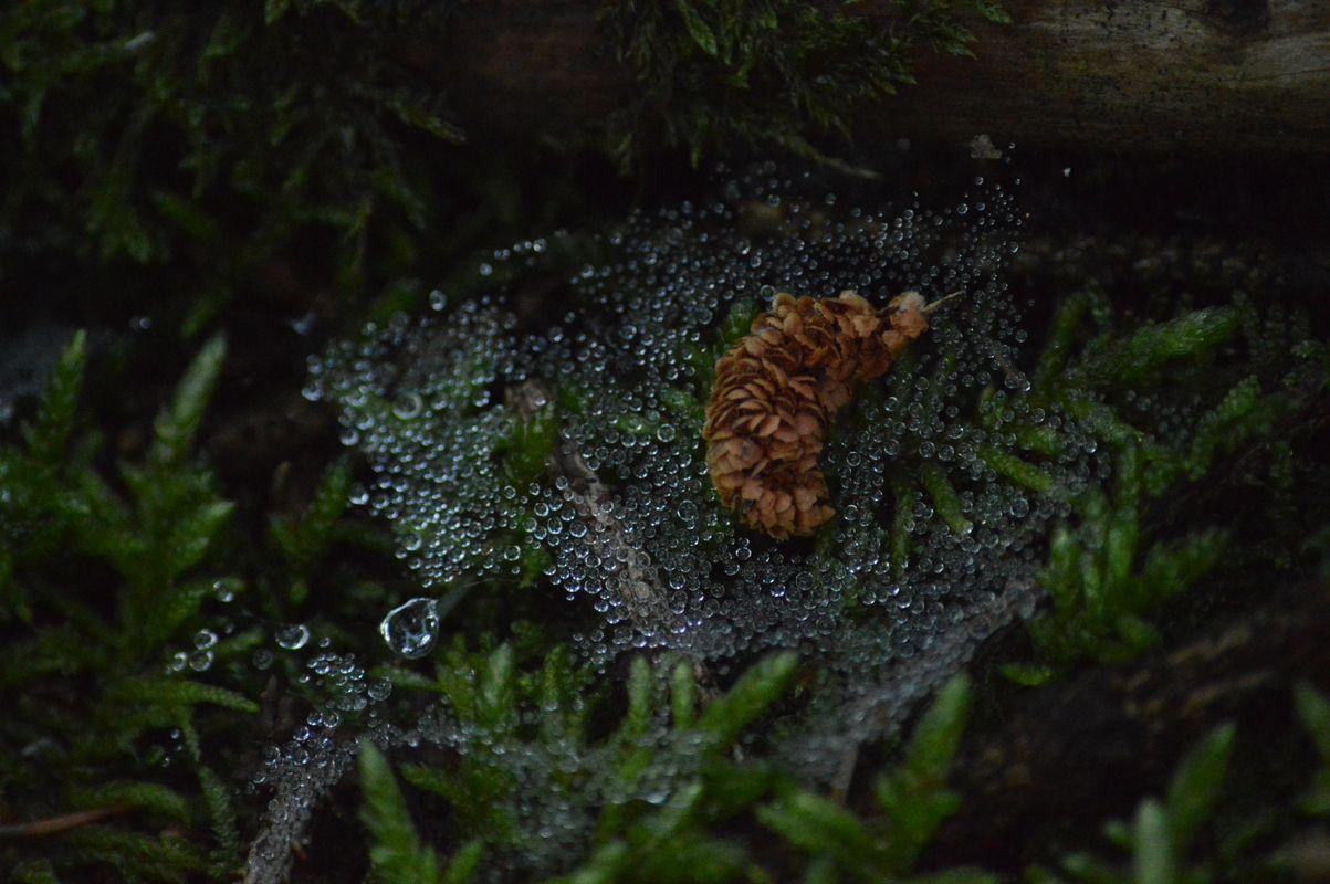 Raindrops on a spiderweb