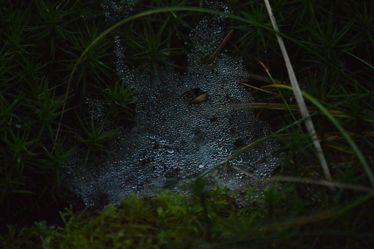Raindrops on a spiderweb 2