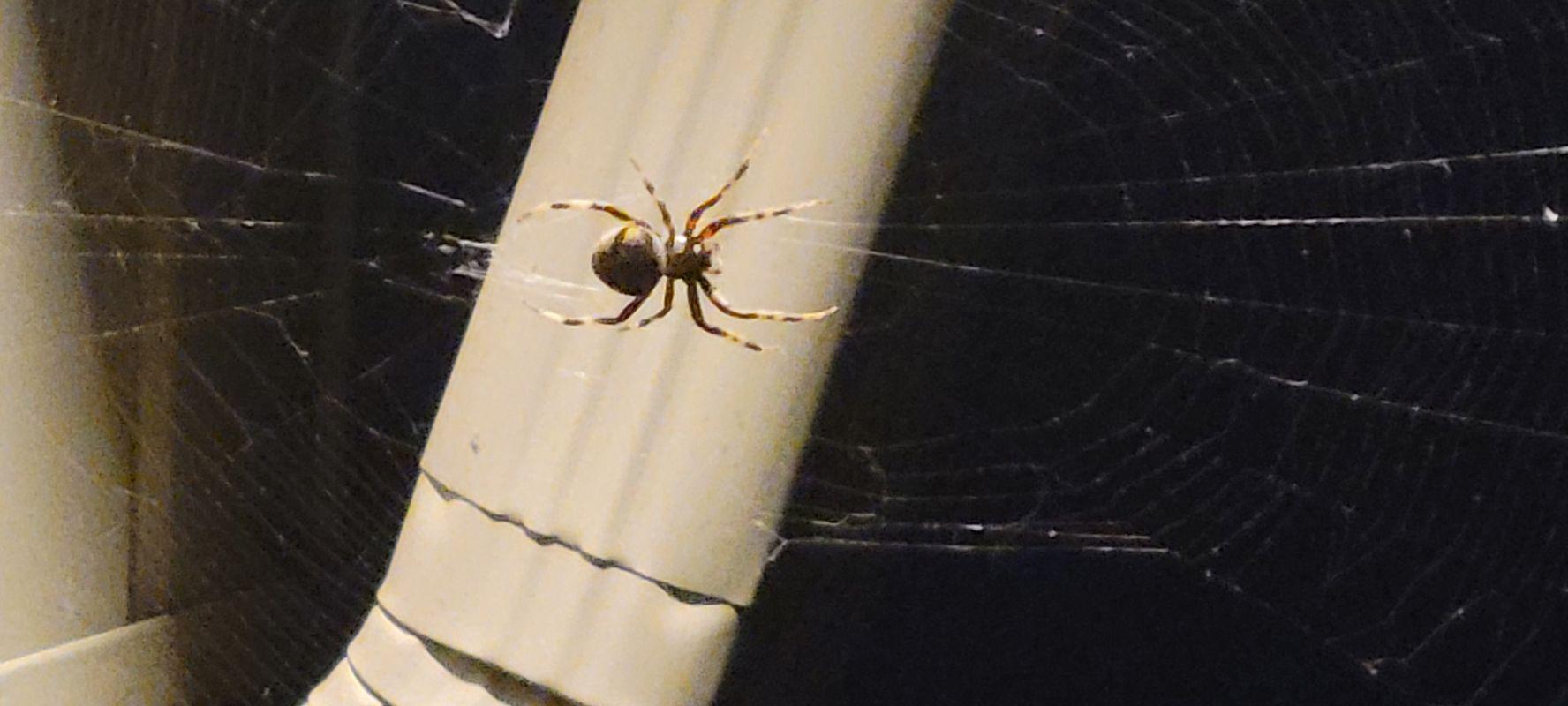 Spider night 20210912_204703