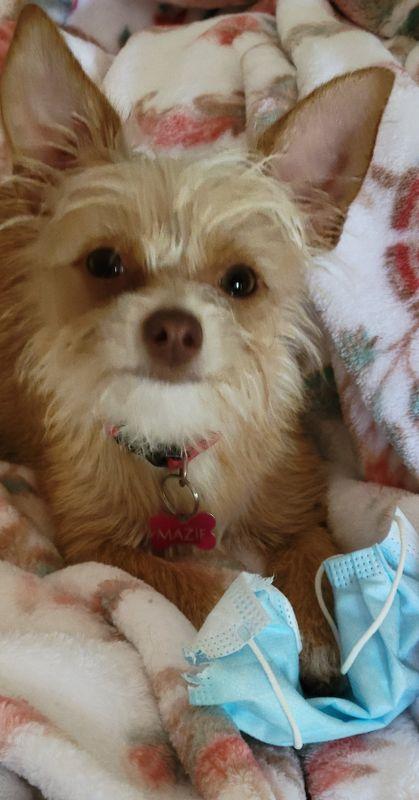 Puppy Mazie  20210913_141219