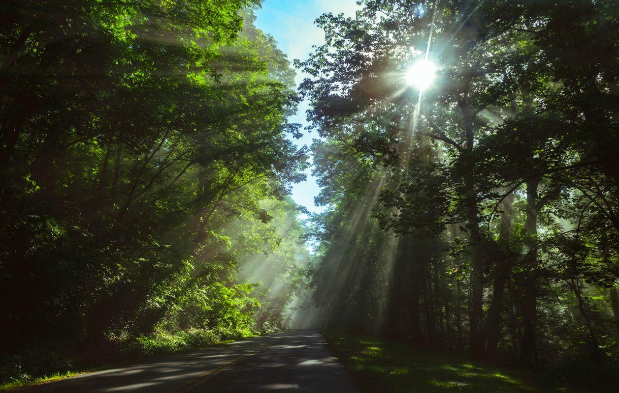 Sunrays on the way to mt mitchel
