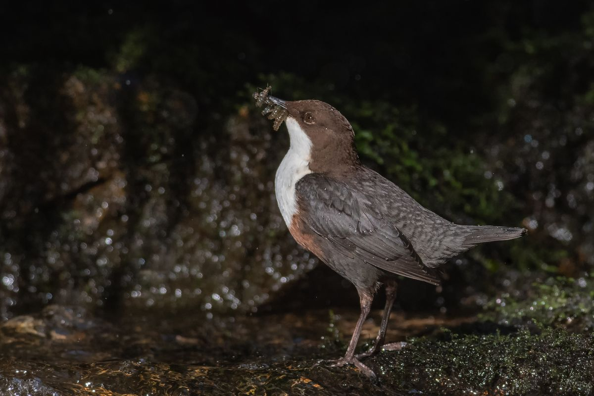 Dipper With Food