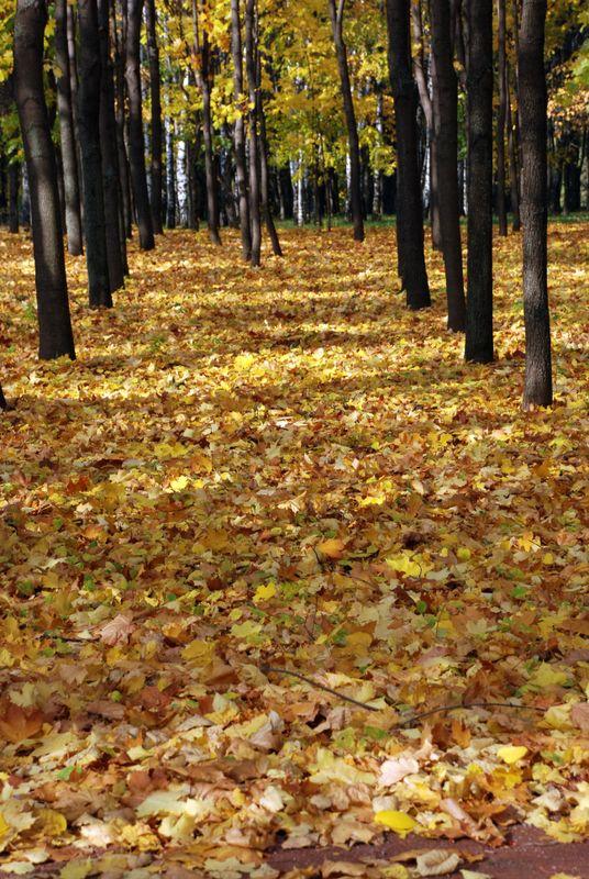 Autumn square.
