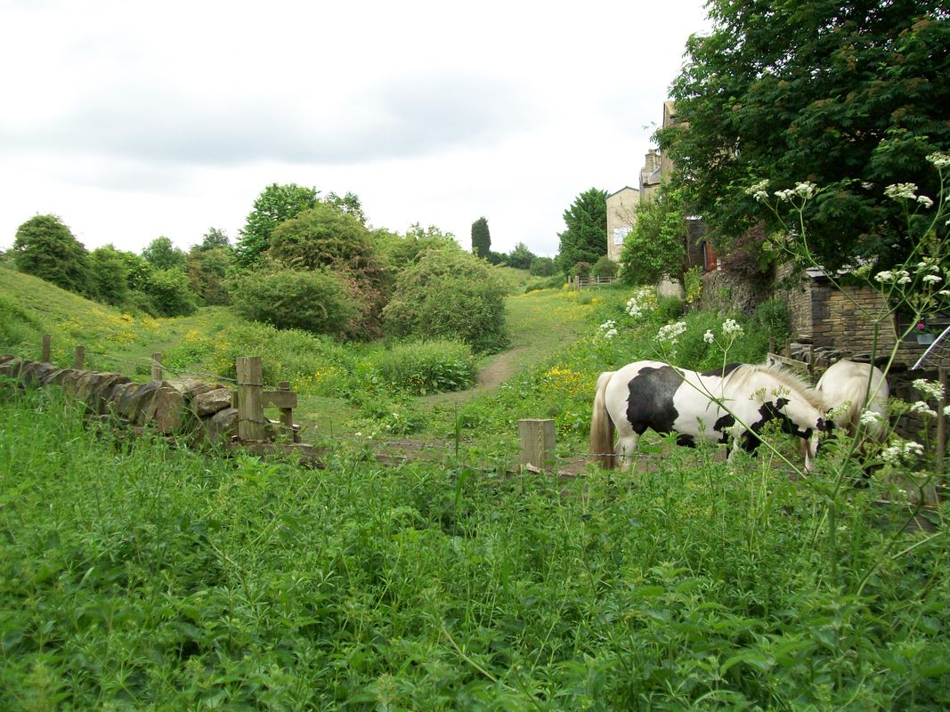 Horses at the bottom of the narrow gauge tramway incline, at Brighouse