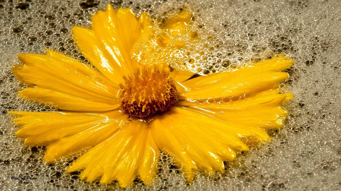 Yellow flower 02  04-29 2019