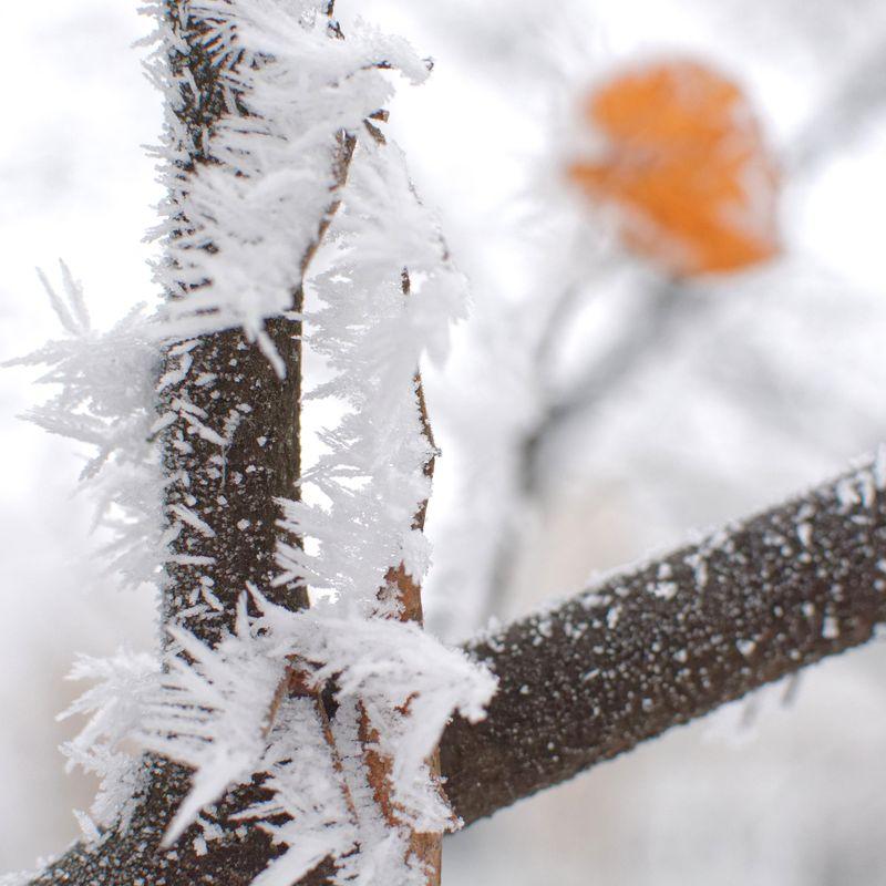 Nature winter decoration