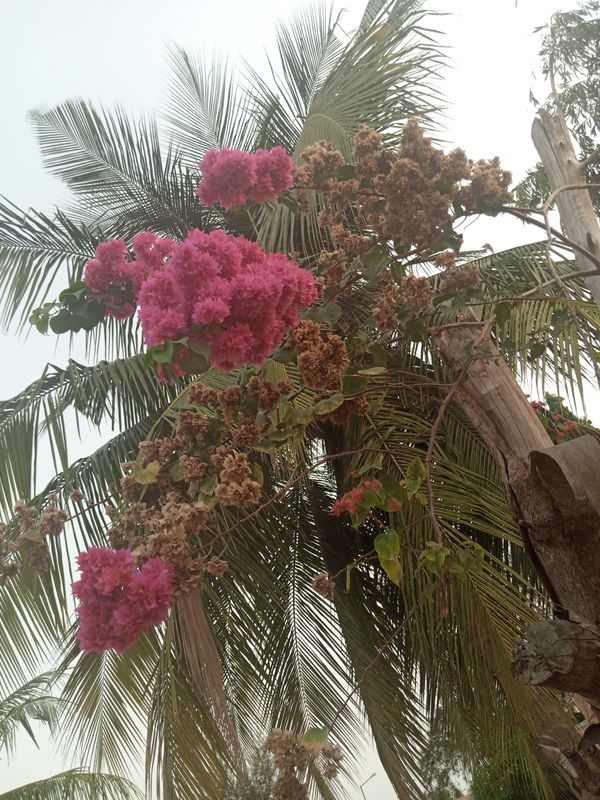 Flowers and palm