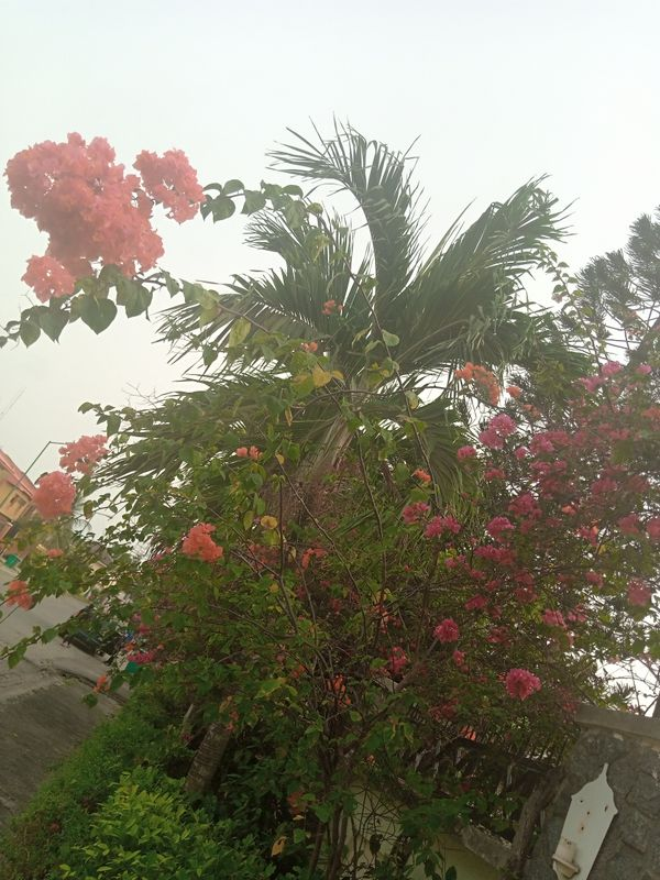 Palm and flowers