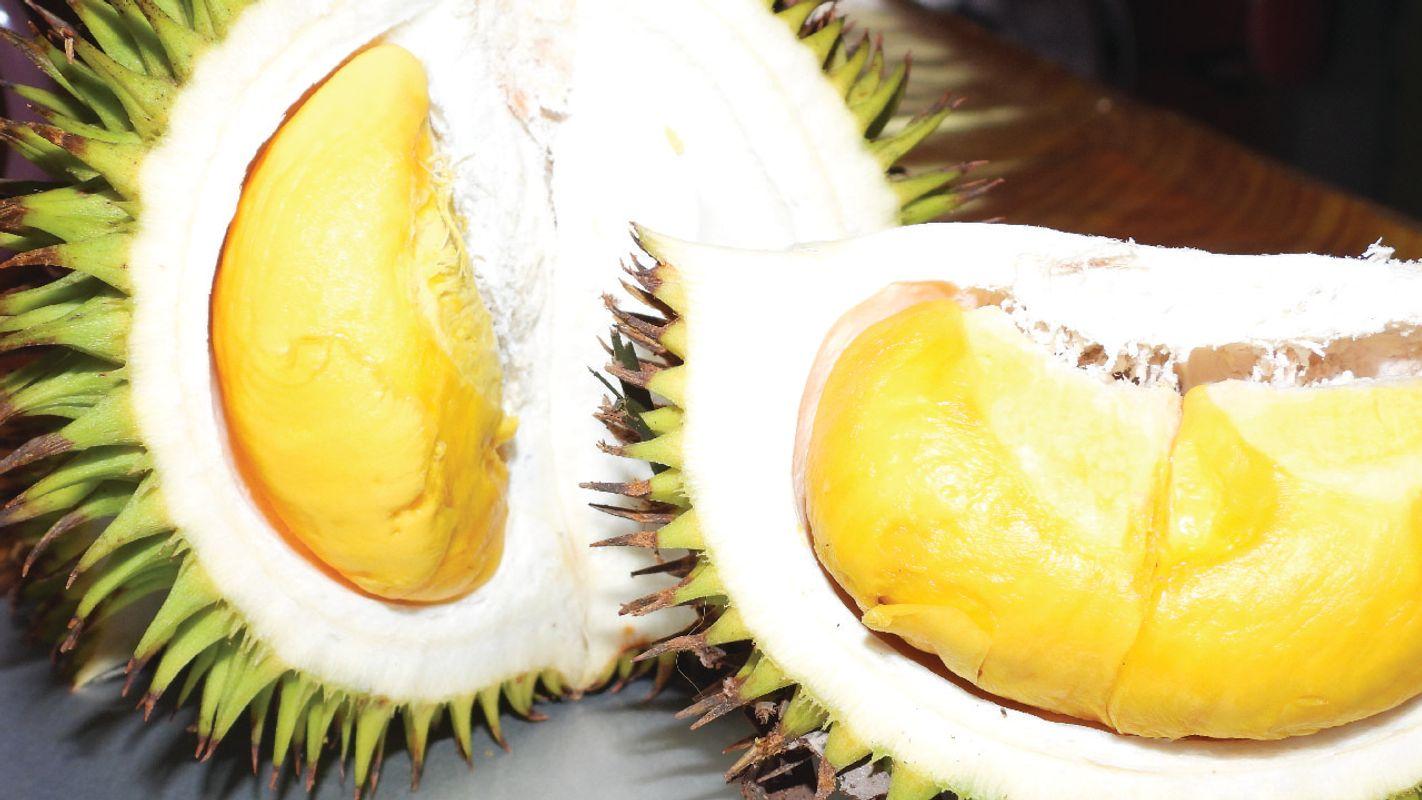 Durian isu