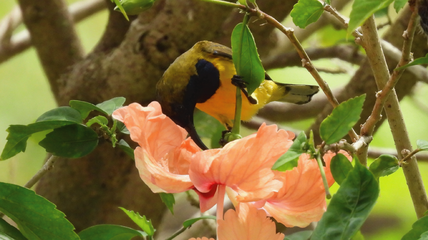 Navyly Bird