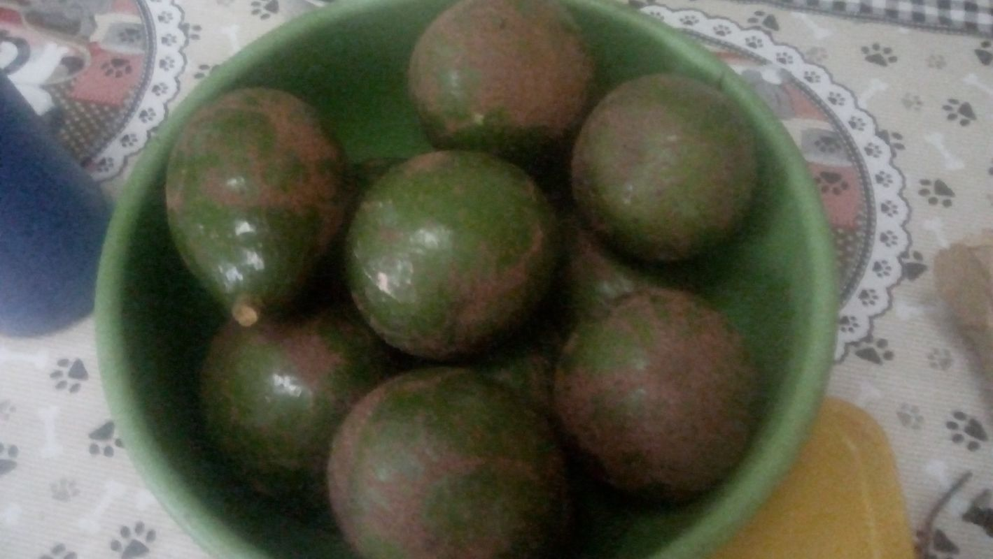 Fruta deliciosa abacate