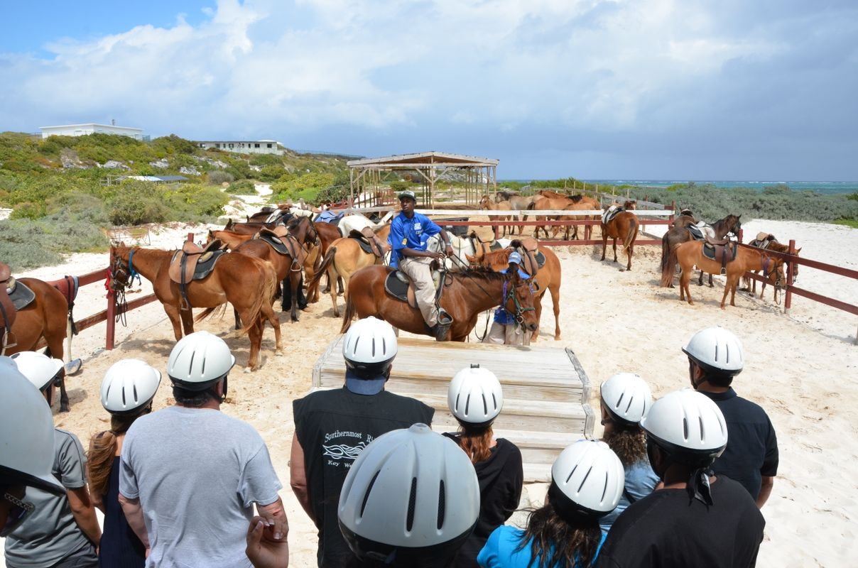 Getting information about the Horse riding