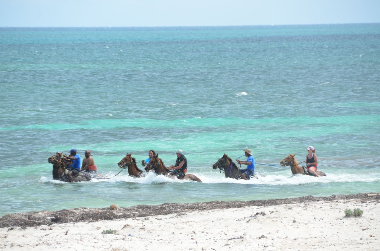 Horses inside the water