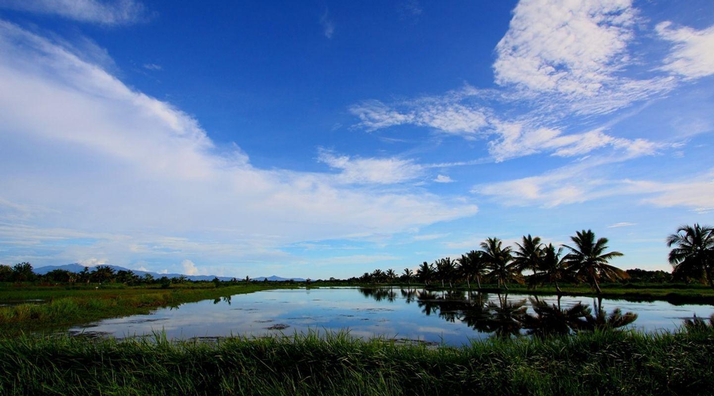 Blue Sky and Coconut Tree