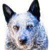 bluedog photo. J.R. McClellan