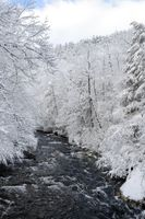 Mountain river with snow covered trees. White Christmas - Winter Wonderland