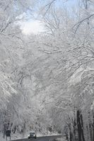 Snow covered trees on mountain road. White Christmas - Winter Wonderland