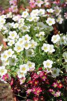 The flowers in my garden.