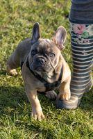 Gorgeous Puppy Dog
