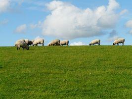 Grass field - meadow