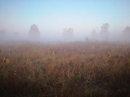 Mist over the meadow