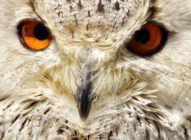 Owl-handsome